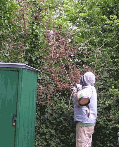 Hornet & wasp nest removal Hampshire