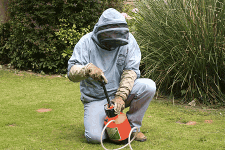 Wasp control treatments in Winchester Hampshire