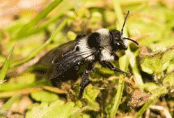 Wasp, Hornet & Bee Identification